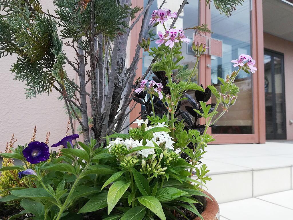 Shiawaseya-花壇も衣替え