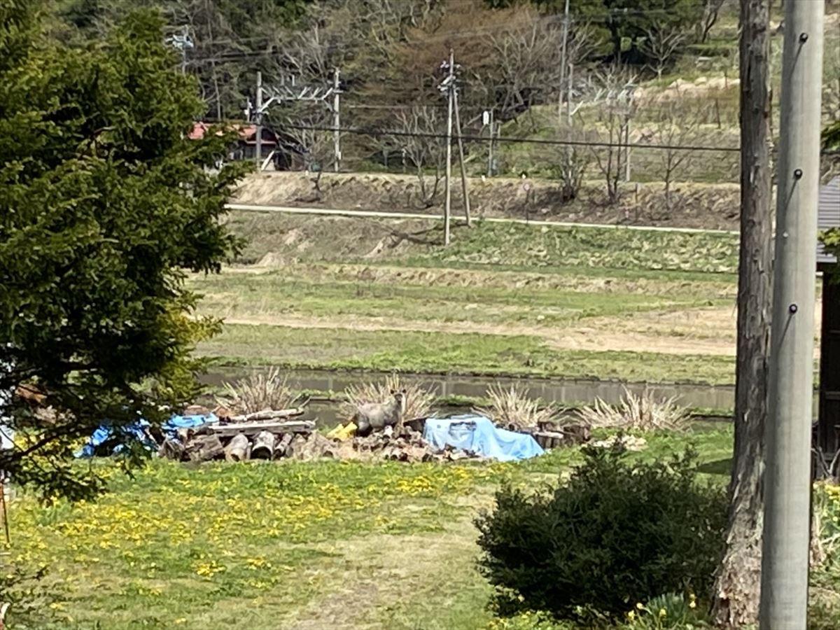 Shiawaseya-この中に動物が隠れています