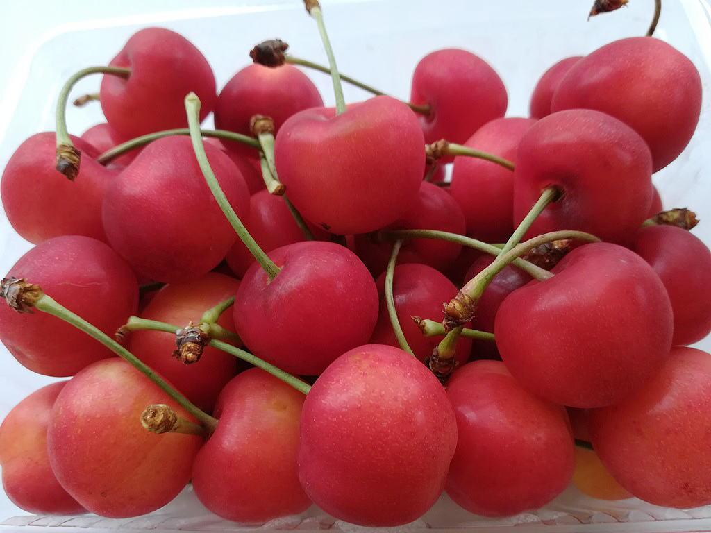 Shiawaseya-旬の果物 〈サクランボ〉